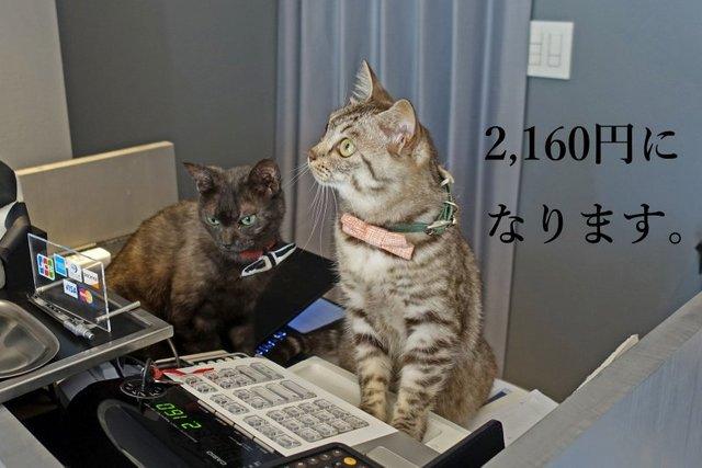DSC01023mc.jpg
