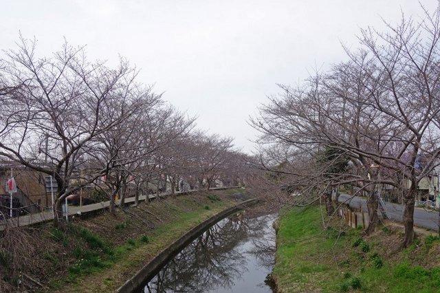 DSC04699m.jpg