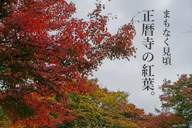DSC04706mc.jpg
